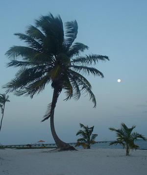 Palm_2